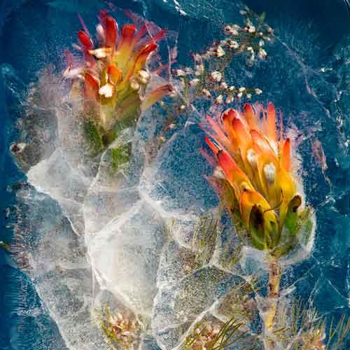 گلهایی یخ زده از آفریقای جنوبی اثر بروس بوید و تاریین اسمیت Bruce Boyd and Tharien Smith کاور